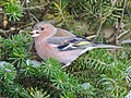 Birds in the garden (16138887365).jpg