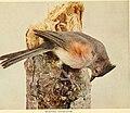 Birds of lakeside and prairie (1901) (14748039734).jpg