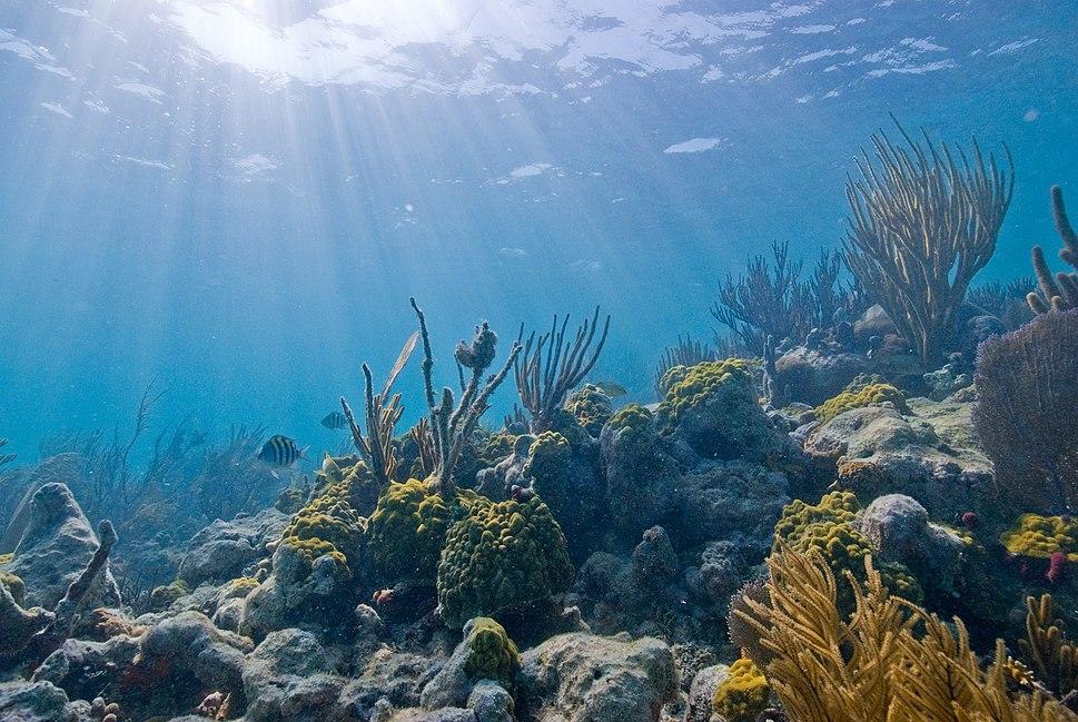 Biscayne underwater NPS1