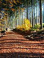 Black Forest (near Elztal) 14 (40270559661).jpg