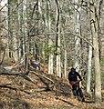 Bobcat Run Rider (6790528871).jpg