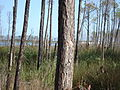 Bon Secour National Wildlife Refuge.jpg