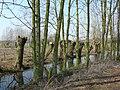 Bornem Barelstraat Knotbomen en hakhout vlasrootput (6) - 193363 - onroerenderfgoed.jpg