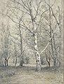 Bos met berkebomen Rijksmuseum SK-A-2499.jpeg