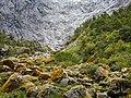 Bosque Encantado Parque Nacional Queulat.jpg