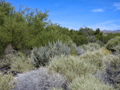 Bosque Interface With Sage.png