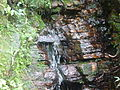 Bosque tropical Yunque riachuelo.JPG