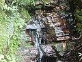 Bosque tropical Yunque riachuelo.JPG