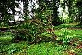Botanic garden limbe15.jpg