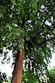 Botanic garden limbe49.jpg