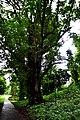 Botanic garden limbe82.jpg