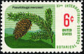 Botanical Congress Douglas Fir 6c 1969 issue U.S. stamp.jpg