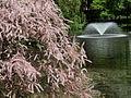 Botaniczny - fontanna.jpg