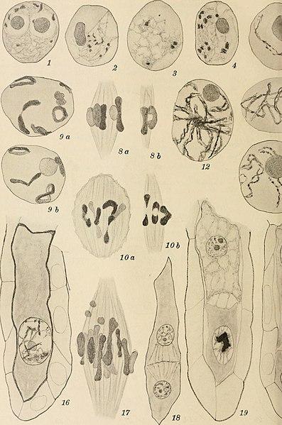 File:Botanisk tidsskrift (1866-1981) (20217032448).jpg