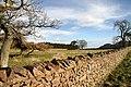 Bowdenmoor Stell - geograph.org.uk - 1174516.jpg