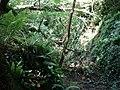 Bradley Brook waterfall - geograph.org.uk - 454578.jpg