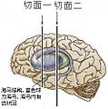 Brain-41.jpg