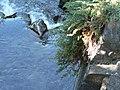 Branches of juniper over Paradise River. (ea4866c309274c82a1dcd012840b3d9f).JPG