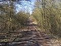 Bridleway in Romer Wood - geograph.org.uk - 1740749.jpg