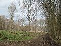 Bridleway in Whitehill Wood - geograph.org.uk - 1779458.jpg
