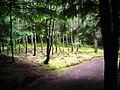 Bright Spot in Glencoe Forest - geograph.org.uk - 892976.jpg