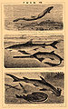 Brockhaus and Efron Encyclopedic Dictionary b53 433-1.jpg
