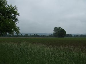 Bohmte - The Stirper Bruch grazing area