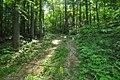 BucklandStateForest.jpg
