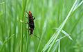 Bug in green (2330746483).jpg