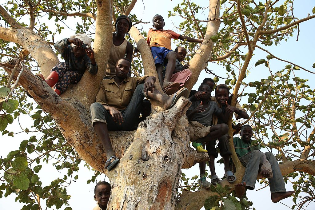 Burundian refugees children on tree. (20124214379)