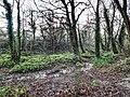 Bushy Park, Dublin -146463 (46478368161).jpg