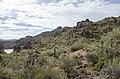 Butcher Jones Trail to Pinter's Point Loop, Tonto National Park, Saguaro Lake, Ft. McDowell, AZ - panoramio (34).jpg