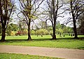 Bute Park on a fine day in Spring - geograph.org.uk - 738386.jpg