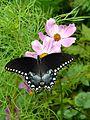 Butterfly 'Eyes'.jpg
