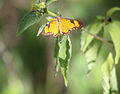 Butterfly in Gambia.jpg