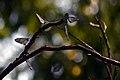 Butterfly on a stick.jpg