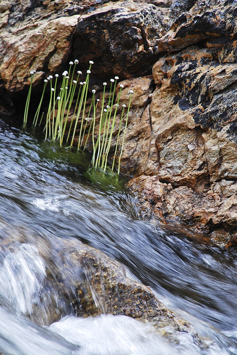 Cachoeira e Chuveirinho.jpg