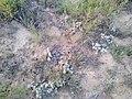 Cacti in NM 2.jpg
