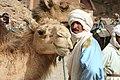 Cameleer (4486189157).jpg