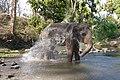 Camp Elephant Bath Self Mudumalai Mar21 A7C 00315.jpg