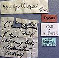 Camponotus concolor casent0101357 label 1.jpg