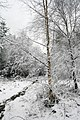 Cannock Chase In The Snow A Snowy Tree (27435789).jpeg
