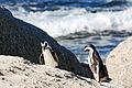 Cape Town 2012 05 16 0054 (7179924923).jpg