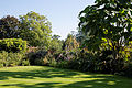 Capel - Manor - Gardens - lawn - border.jpg