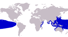 Approximate range of the island trevally