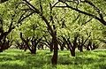 Care orchards 20090417142645.jpg