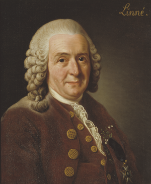 Carl von Linné, subsequently designated type of the species Homo sapiens
