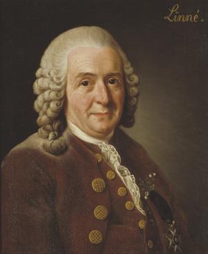 Carl von Linné, nachträglich designierter Typus der Art Homosapiens