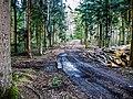 Carrefour forestier du Trou du Loup.jpg