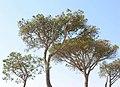 Cascais Portugal 060415 216.jpg